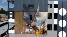 Peregrine Falcon street art mural painted in Linden, Johannesburg South Africa by local artist, Sonny