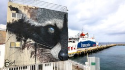 Raccoon street art mural painted by Sonny in Cozumel, Mexico for Sea Walls in partnership with Pangeaseed Foundation