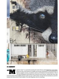 Street Art Today Article on the 7 best murals of the month in May 2019 featuring Sonny's Raccoon mural in Cozumel, Mexico