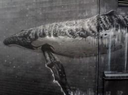 Close up of Sonny Street Art mural of humpback whale, painted in Gisborne, New Zealand for Sea Walls in partnership with Pangeaseed Foundation
