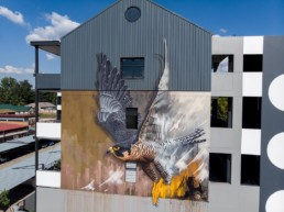 Sonny's street art mural of a peregrine falcon, painted in Linden, Johannesburg South Africa