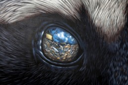 Close up of Raccoon eye with reflection of a landfill, painted by Sonny in Cozumel, Mexico for Sea Walls in collaboration with the Pangeaseed Foundation