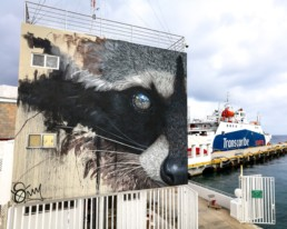 Sonny street art mural of a raccoon painted in Cozumel Mexico, as part of Sea Walls in partnership with Pangeaseed Foundation